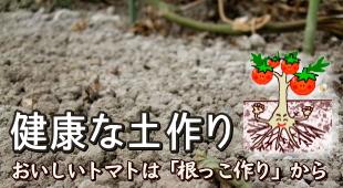 健康な土作り~おいしいトマトは「根っこ作り」からのイメージ