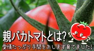 親バカですが、良く出来た我家の「自慢」のトマトです!のイメージ