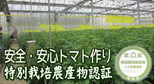安全・安心トマト作り~特別栽培農産物認証のイメージ