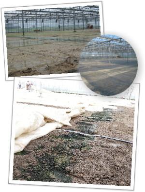 土壌還元消毒