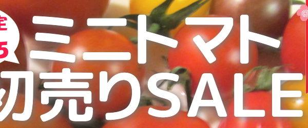 ミニトマト初売りセール2018