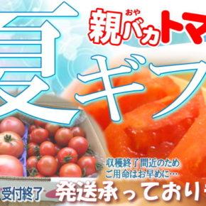 トマトの夏ギフト