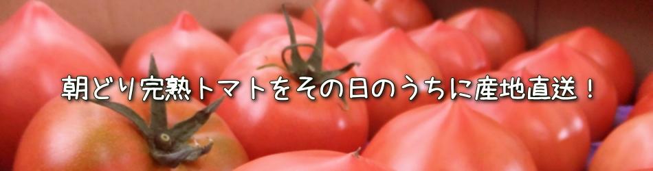 朝どり完熟トマトをその日のうちに産地直送!