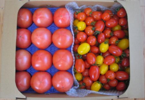 ミニトマト4キログラム箱