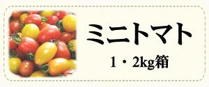 カテゴリー「ミニトマト」