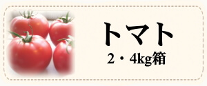 カテゴリー「トマト」